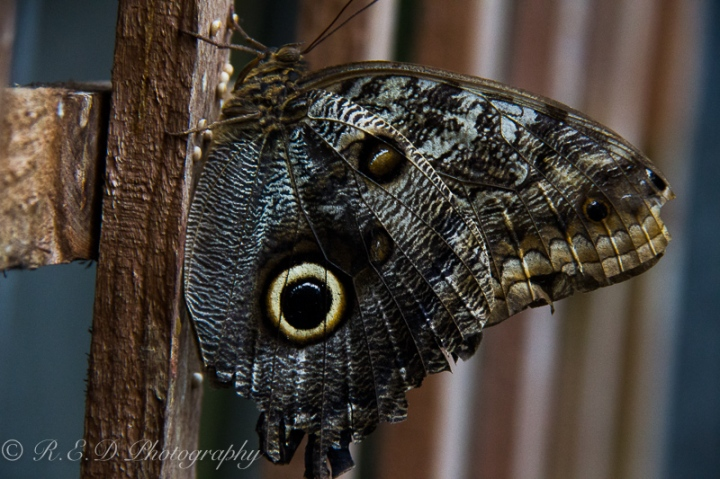 butterfly house stratford upon avon