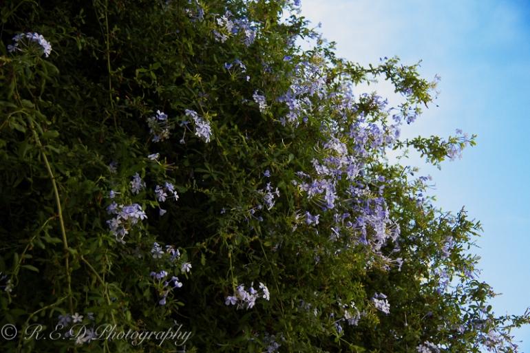 travel photography ibiza summer 2015 photographer lifestyle blogger