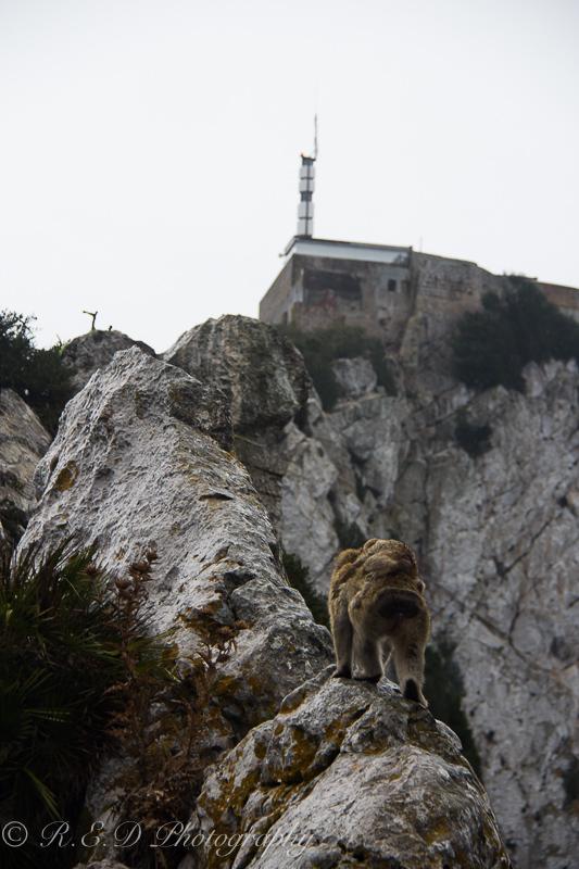 rhidixonblog-lifestyle-blogger-gibraltar-19