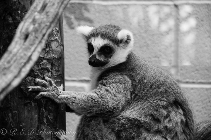 rhidixonblog-lifestyle-blogger-bristol-zoo-40