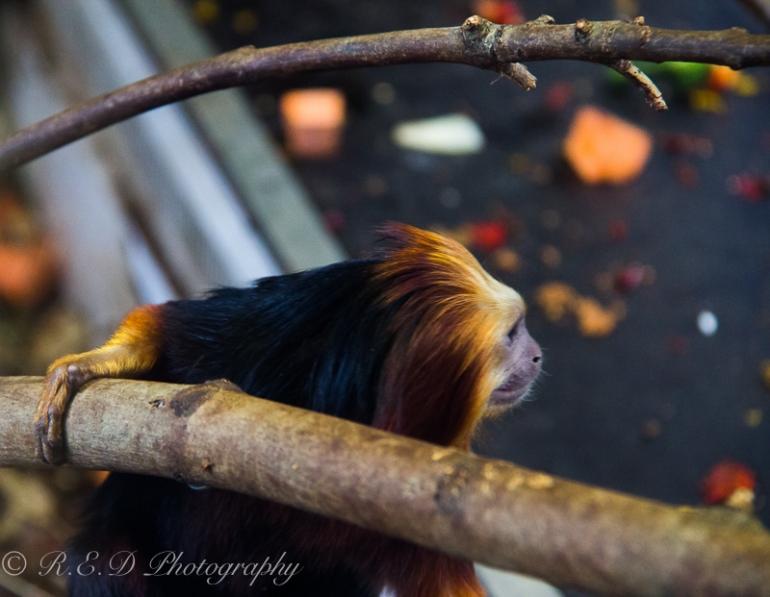 rhidixonblog-lifestyle-blogger-bristol-zoo-44