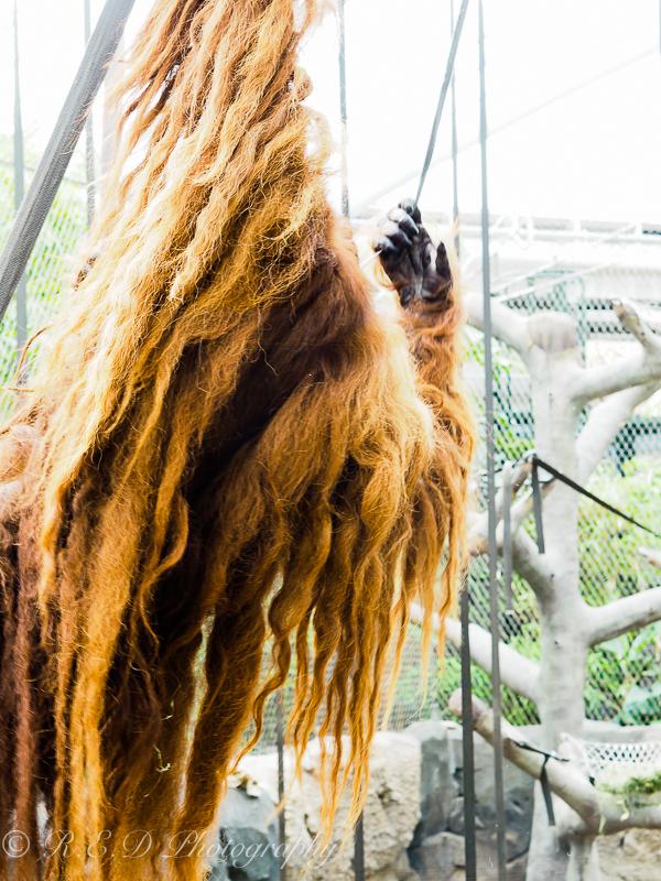 rhidixonblog lifestyle blogger chester zoo