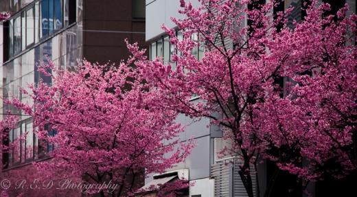 rhidixonblog lifestyle blogger tokyo japan