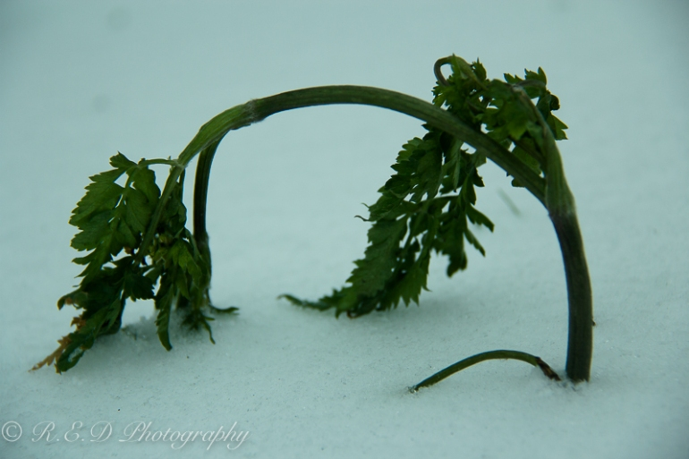 rhidixonblog-lifestyle-blogger-snow-day-6